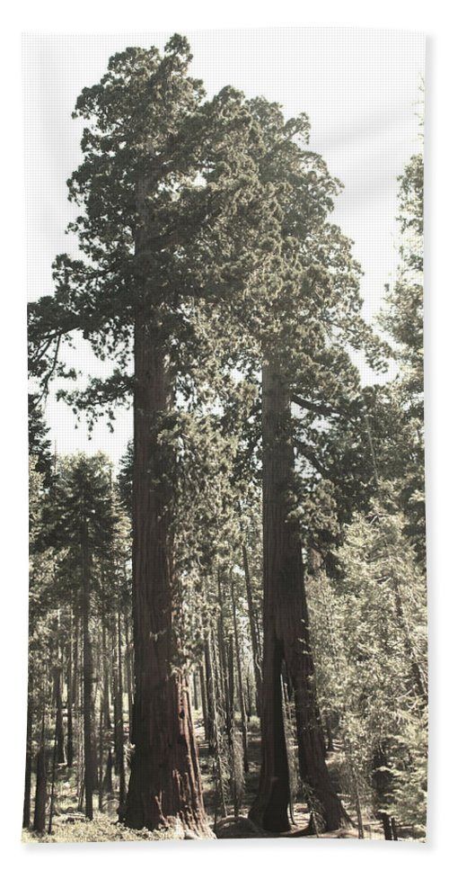Red Woods Sequoias Mariposa Grove Yosemite Bath Sheet featuring the photograph Sequoias by Michael Cressy