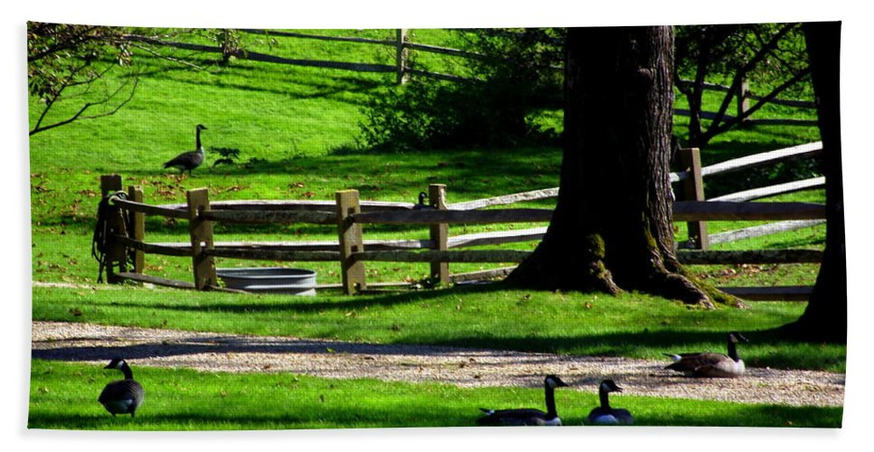 Tashmoo Farm Bath Sheet featuring the photograph Serenity At Tashmoo Farm by CapeScapes Fine Art Photography