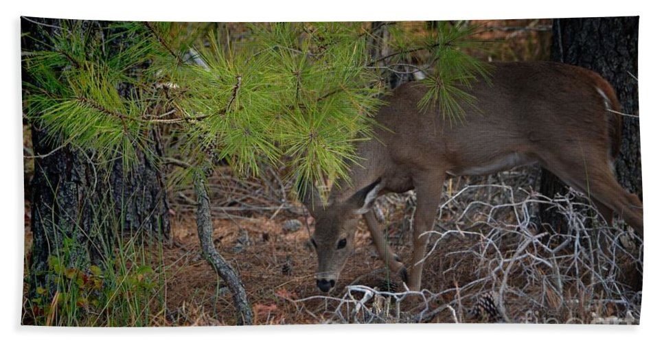 Deer Hand Towel featuring the photograph Serious Snackin by Robert McCubbin