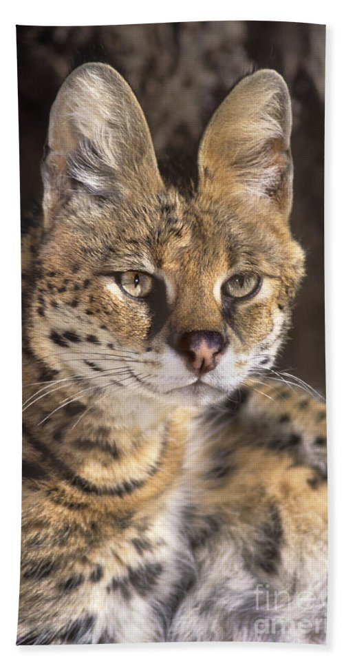 Serval Bath Sheet featuring the photograph Serval Portrait Wildlife Rescue by Dave Welling