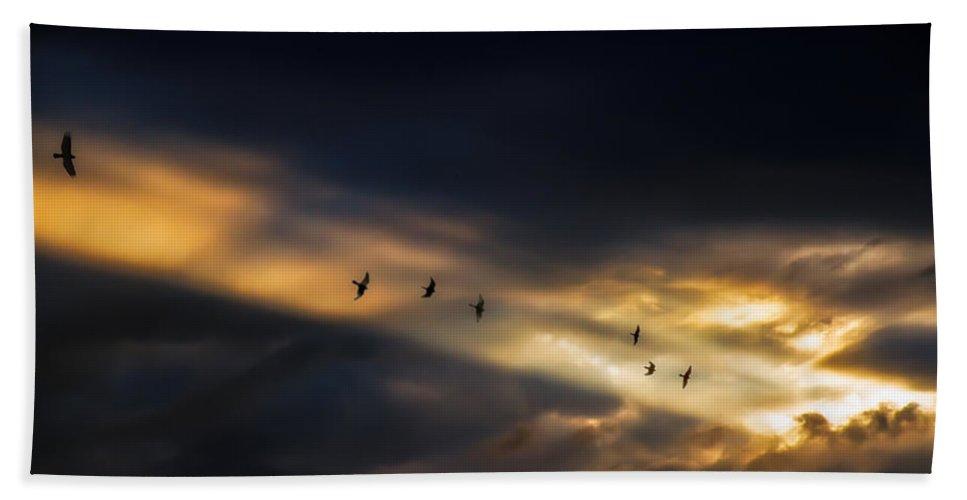 Birds Bath Sheet featuring the photograph Seven Bird Vision by Bob Orsillo