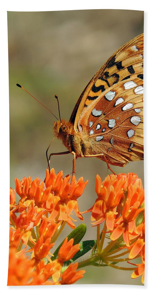 Butterfly Hand Towel featuring the photograph Shades Of Orange by Linda Shannon Morgan