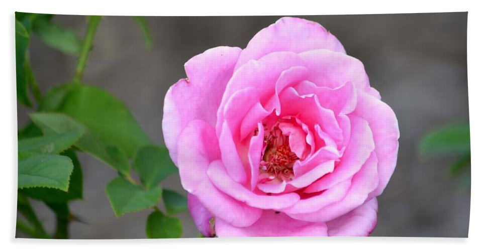 Rose Bath Sheet featuring the photograph Shades Of Pink by Deena Stoddard