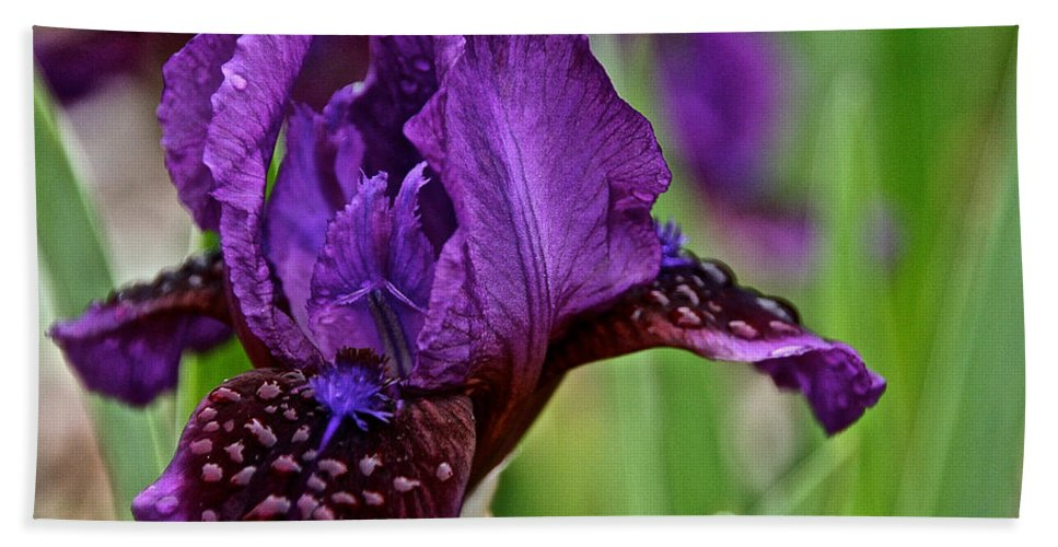 Flower Bath Sheet featuring the photograph Shades Of Purple by Susan Herber