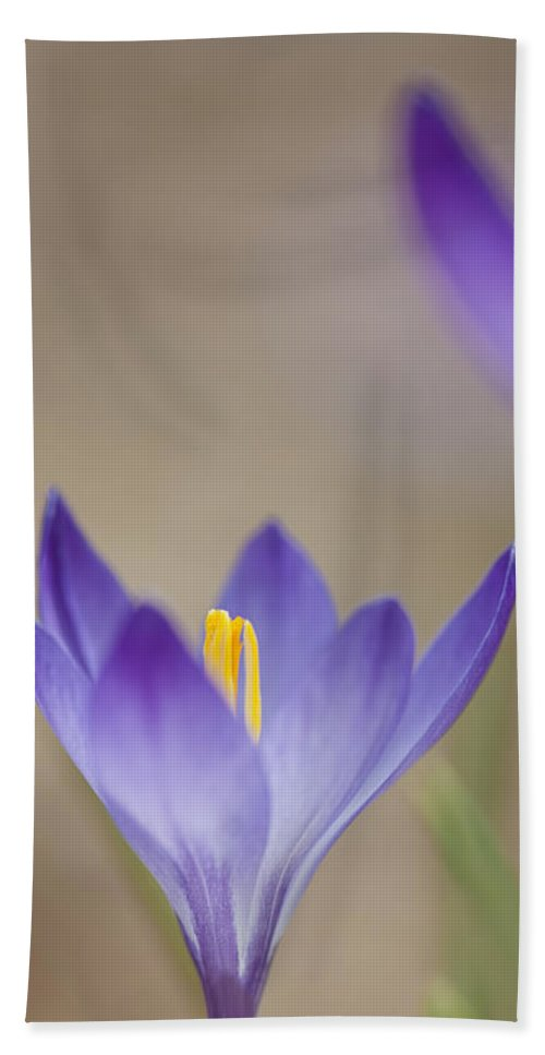 Crocus Hand Towel featuring the photograph Shadow by Jean-Pierre Ducondi