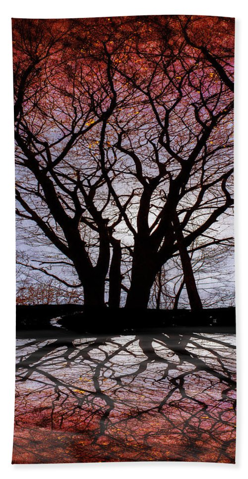 Tree Hand Towel featuring the photograph Shadow Secrets by Bob Orsillo