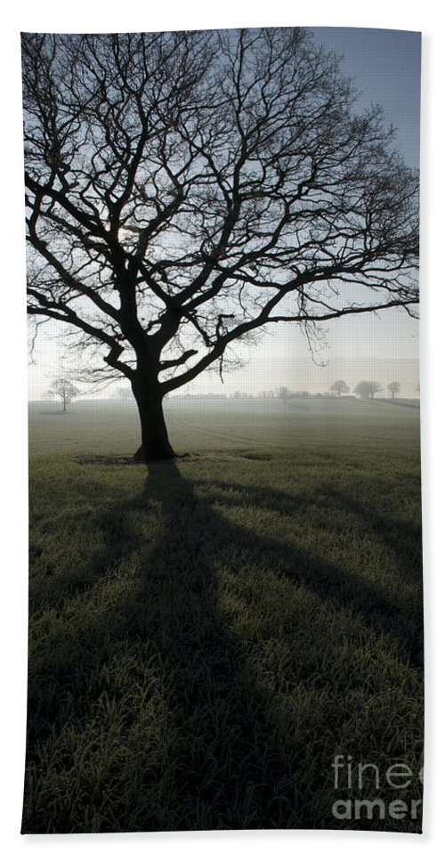 Acton Bath Sheet featuring the photograph Shadow Tree by Anne Gilbert