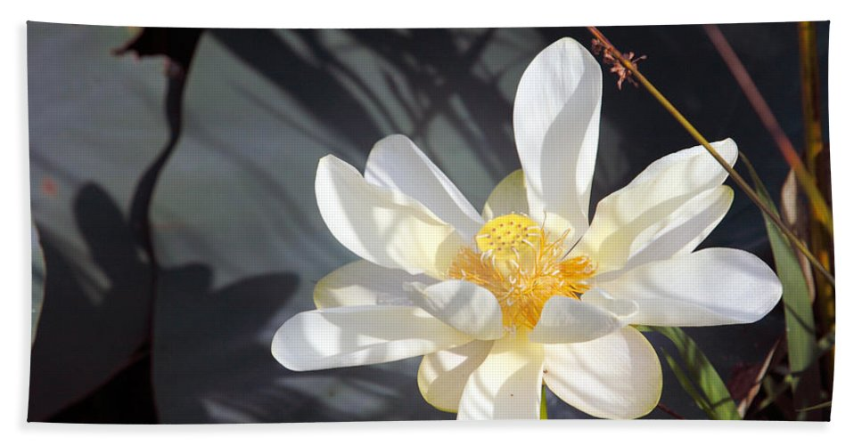 Lotus Hand Towel featuring the photograph Shadows by Amanda Barcon