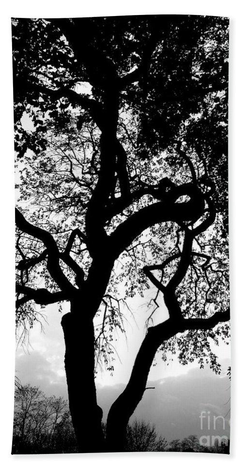Oak Bath Sheet featuring the photograph Shady Silhouette by Charlotte Stevenson