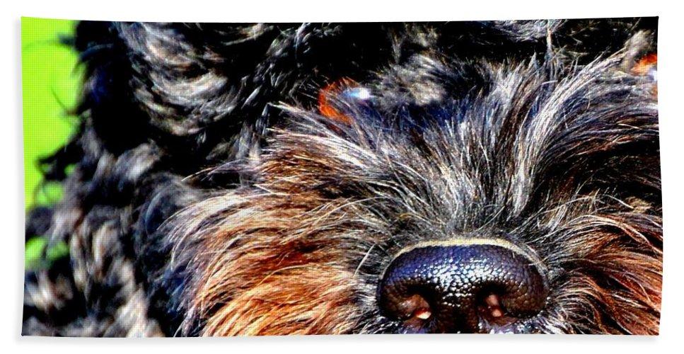 Dog Bath Sheet featuring the photograph Shaggy Black Dog by Marysue Ryan