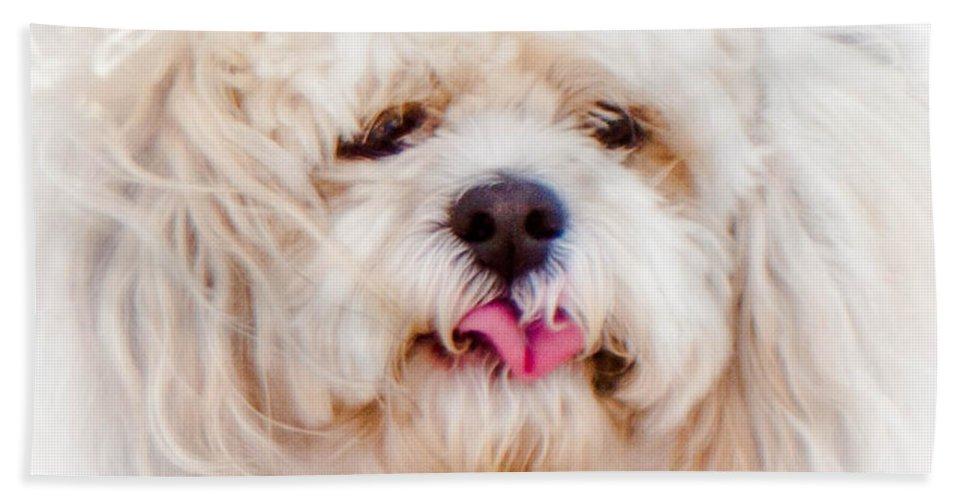 Shaggy Dog Hand Towel featuring the photograph Shaggy Dog by Mechala Matthews