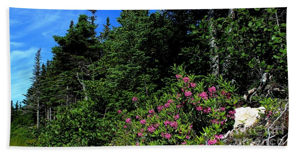 Sheep Laurel Shrub Hand Towel featuring the photograph Sheep Laurel Shrub by Barbara Griffin