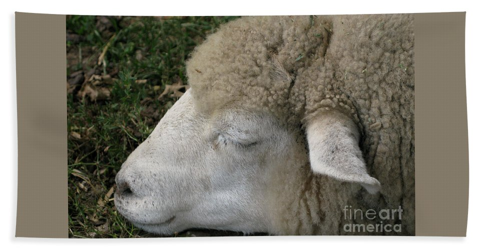 Sheep Bath Towel featuring the photograph Sheep Sleep by Ann Horn