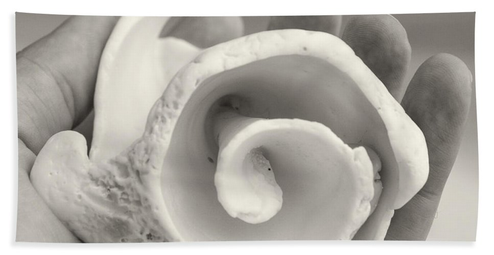 Shells Hand Towel featuring the photograph Shell On Cozumel by For Ninety One Days