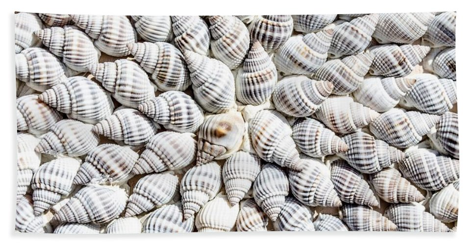 Shells Bath Sheet featuring the photograph Shells by FL collection