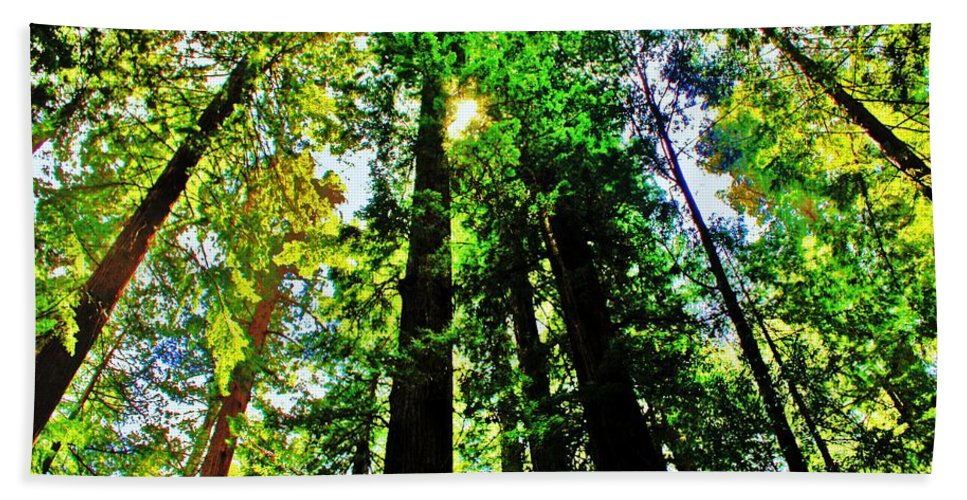 Redwoods Bath Sheet featuring the photograph Shine by Benjamin Yeager