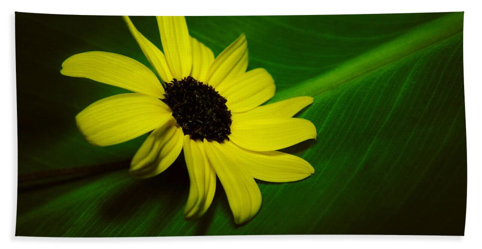 Flower Hand Towel featuring the photograph Shine Your Light by Marcus Jones