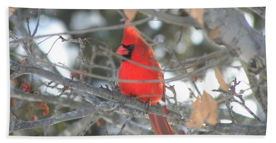 Nature Hand Towel featuring the photograph Shining Bright Red by Peggy McDonald