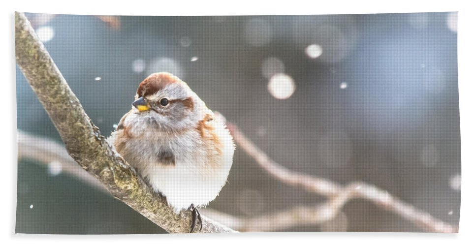 Hand Towel featuring the photograph Shiny Tree Sparrow by Cheryl Baxter