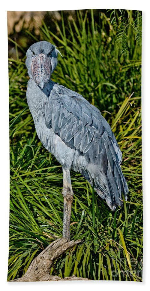 Animal Hand Towel featuring the photograph Shoebill Stork by Anthony Mercieca