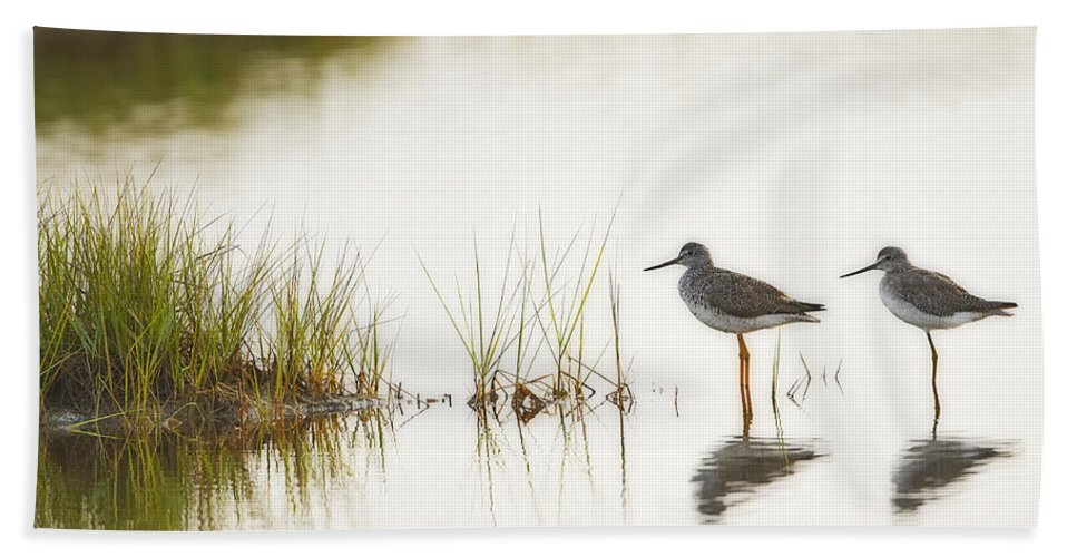Shorebird Bath Sheet featuring the photograph Shorebirds At Dusk by John Vose