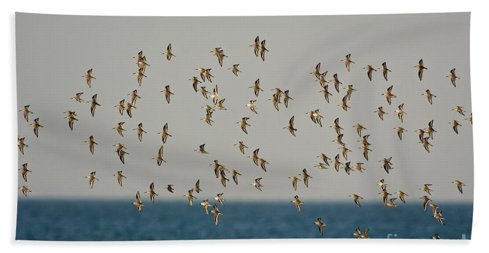 Animal Hand Towel featuring the photograph Shorebirds Flying by Anthony Mercieca