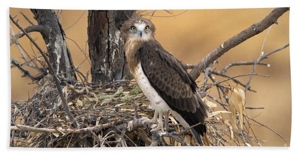 Bird Hand Towel featuring the photograph Short-toed Snake Eagle Circaetus Gallicus by Eyal Bartov