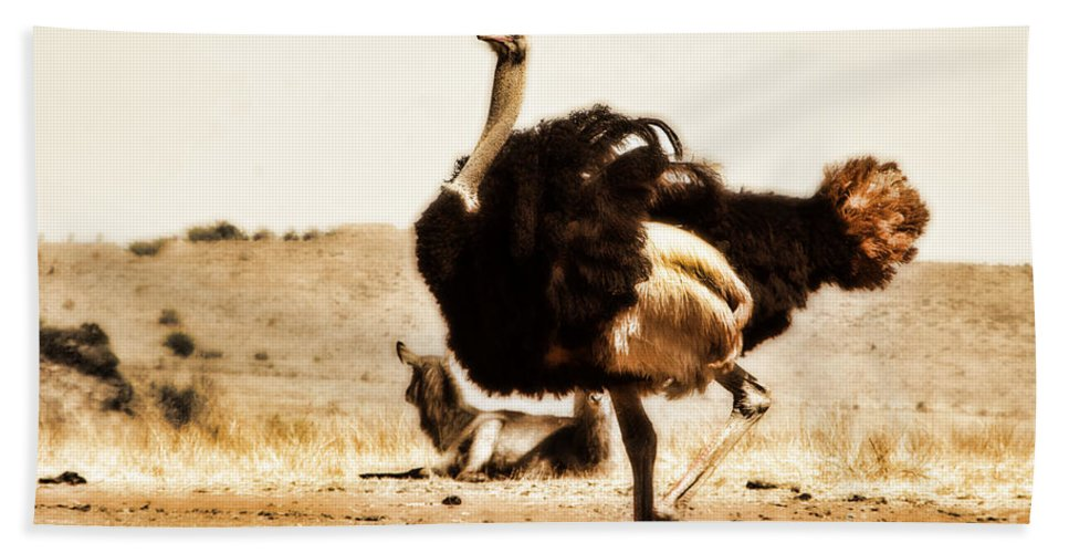 Ostrich Hand Towel featuring the photograph Show-off V4 by Douglas Barnard