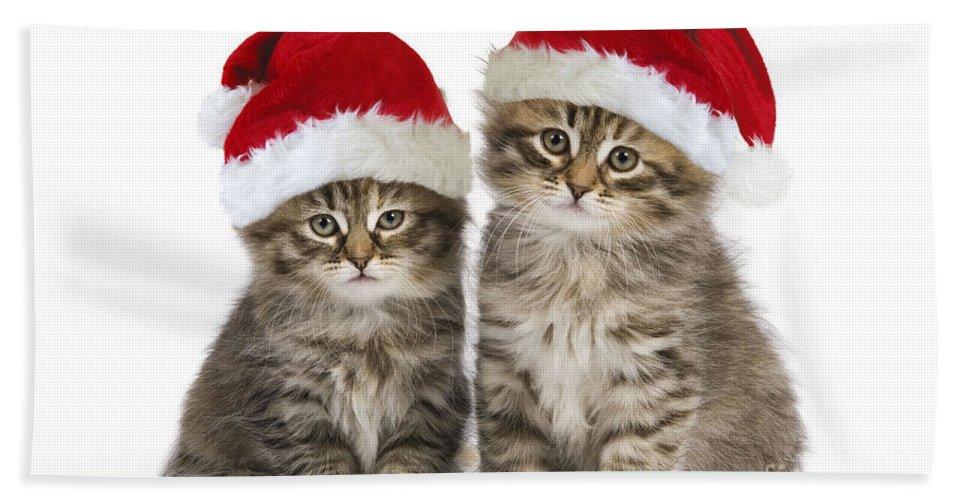 Siberian Cat Bath Sheet featuring the photograph Siberian Kittens In Hats by Jean-Michel Labat
