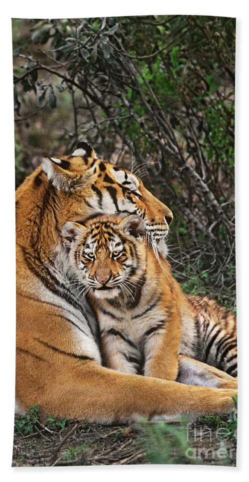 Siberian Tiger Hand Towel featuring the photograph Siberian Tiger Mother And Cub Endangered Species Wildlife Rescue by Dave Welling