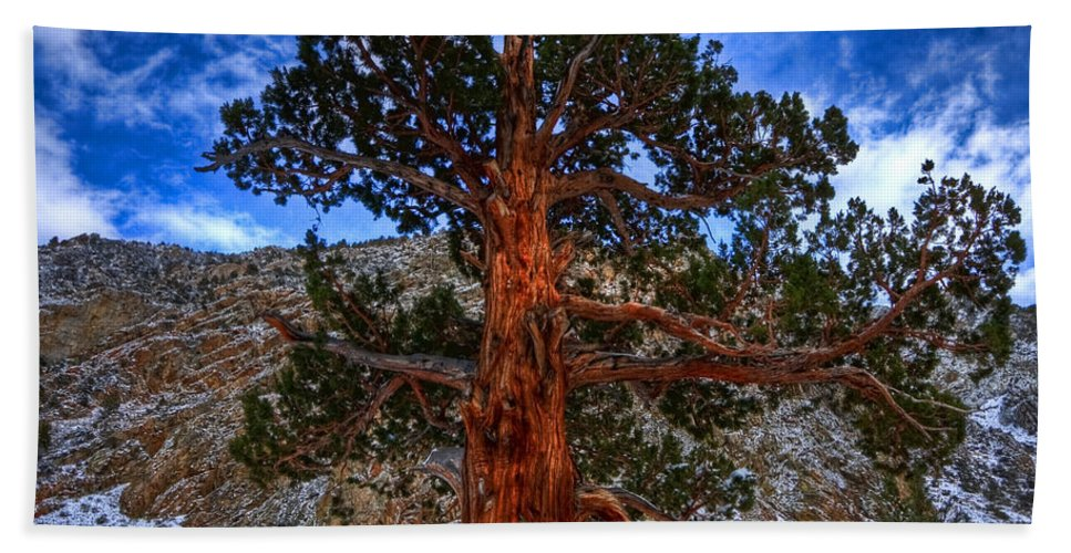 Pine Bath Sheet featuring the photograph Sierra Pine by Beth Sargent
