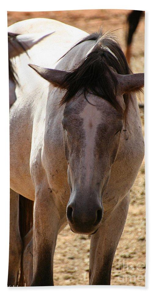 Horses Bath Sheet featuring the photograph Siesta by Susan Herber