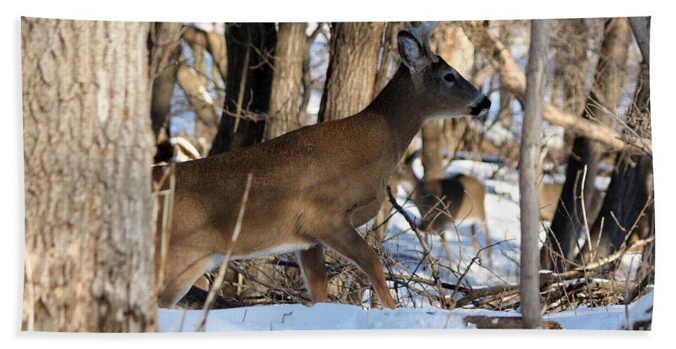 Deer Bath Sheet featuring the photograph Silent Creeper by Lori Tordsen