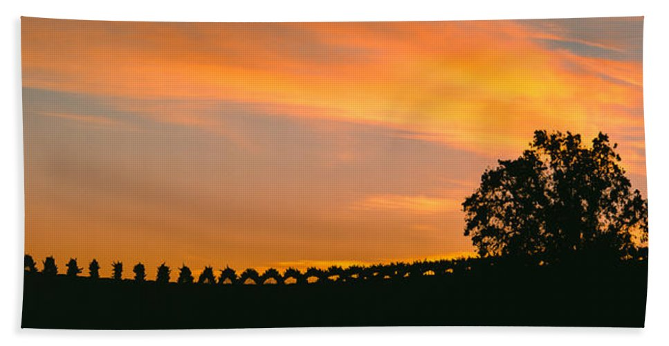 Photography Bath Sheet featuring the photograph Silhouette Of Vineyard At Sunset, Paso by Panoramic Images