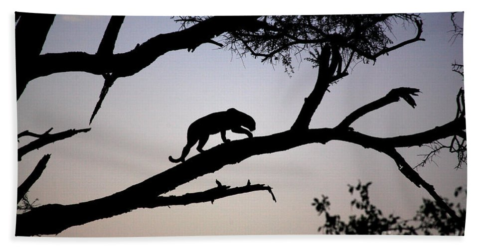 Africa Bath Sheet featuring the photograph Silhouetted Leopard by Deborah Benbrook