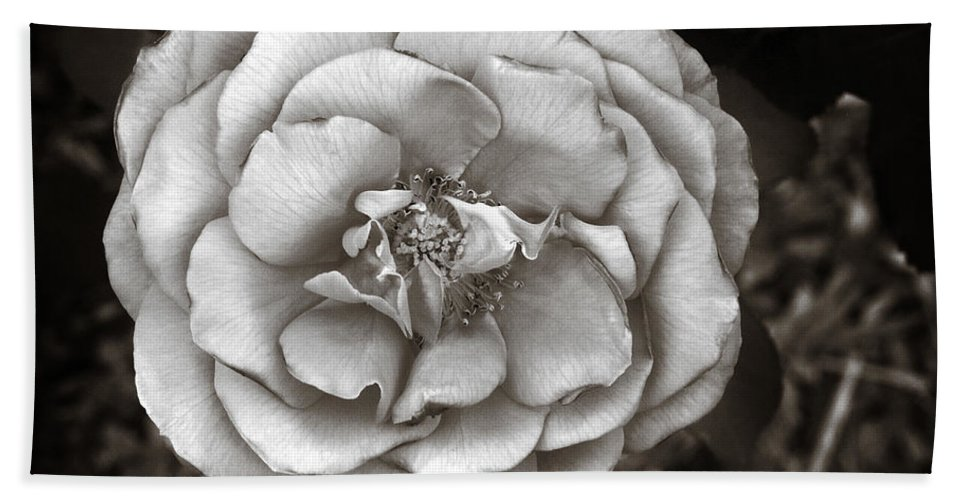 Silky Bath Sheet featuring the photograph Silky Rose by Marilyn Hunt