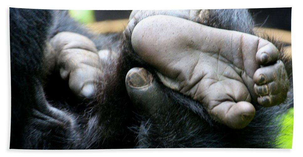 Mountain Gorillas Bath Sheet featuring the photograph Silverback Grooming 2 by David Beebe