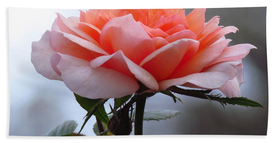 Rose Hand Towel featuring the photograph Simply Rose by Carol Montoya