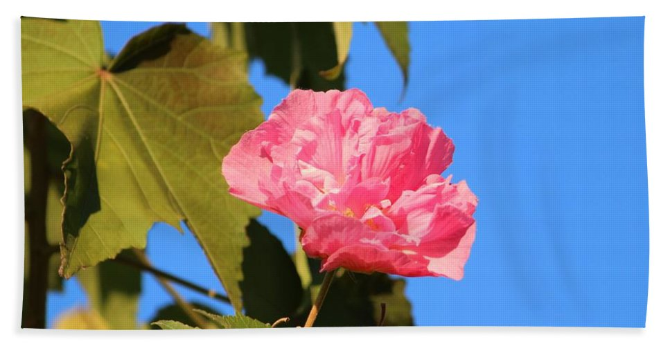 Pink Hand Towel featuring the photograph Single Pink Flower by Cynthia Guinn
