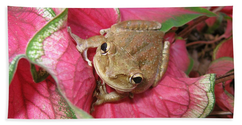 Frog Hand Towel featuring the photograph Pretty In Pink by Marcus Jones