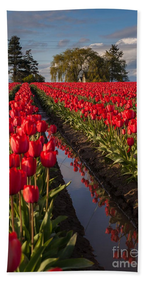 Tulip Bath Sheet featuring the photograph Skagit Glorious Day by Mike Reid