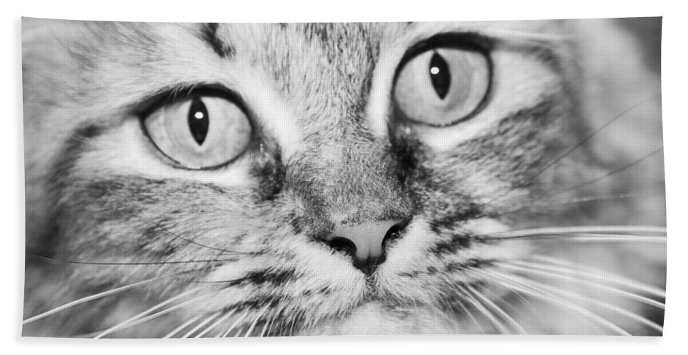 Wide Bath Sheet featuring the photograph Skc 1498 Wide Eyed by Sunil Kapadia