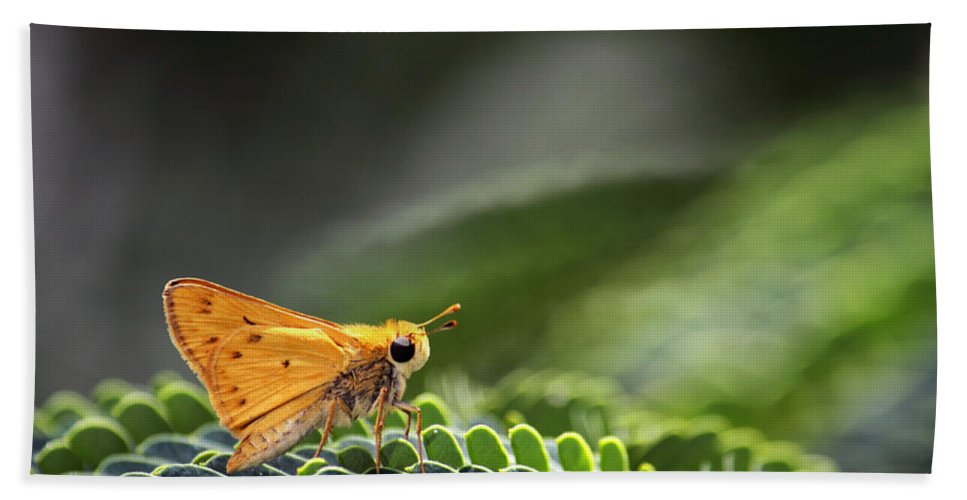 Macro Hand Towel featuring the photograph Skipper Butterfly On Mimosa Leaf by Jason Politte