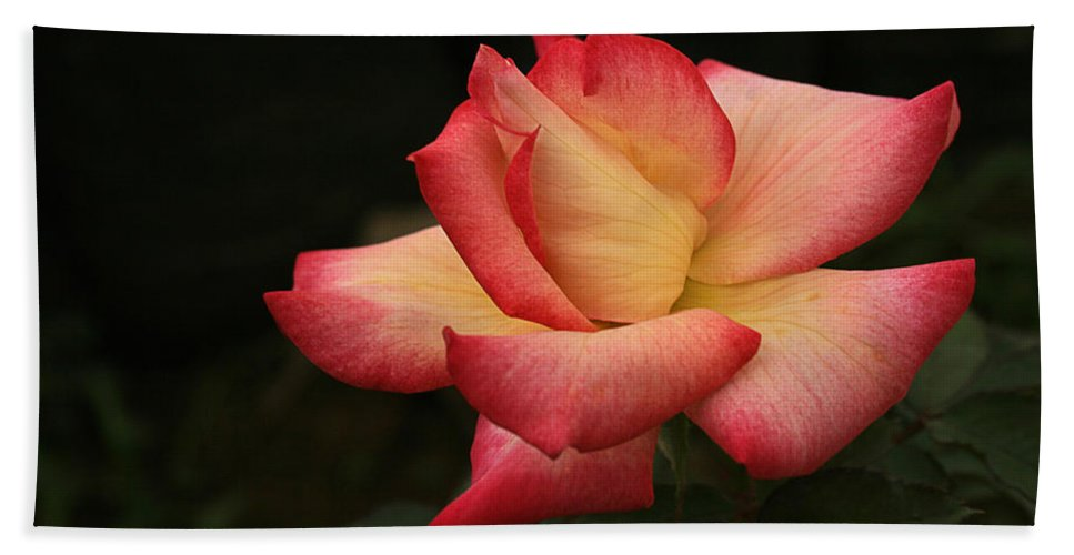 Flower Hand Towel featuring the photograph Skc 0432 Blooming And Blossoming by Sunil Kapadia
