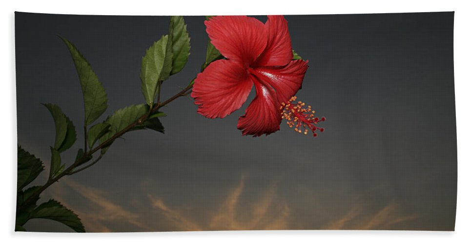 Fresh Hand Towel featuring the photograph Skc 0452 Hibiscus 3 by Sunil Kapadia