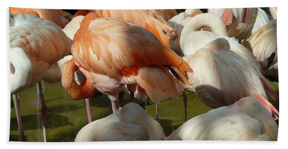 Bird Bath Sheet featuring the photograph Sleeping Beauties by Valerie Ornstein