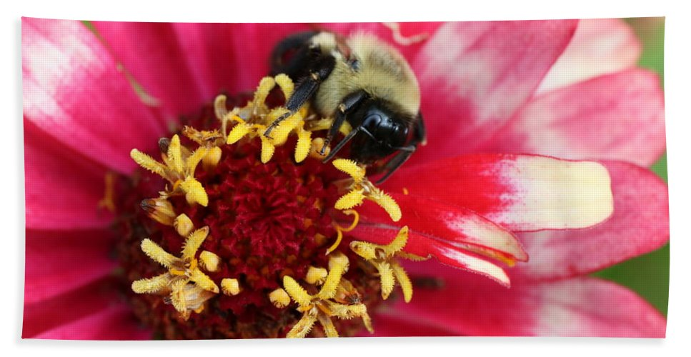 Bumble Bee Bath Sheet featuring the photograph Sleeping Bumble Bee by David Mayeau