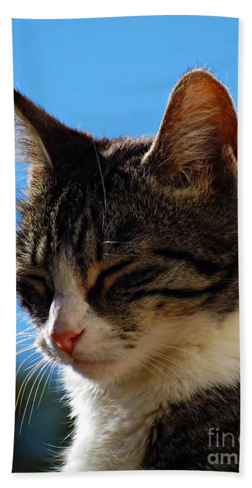 Cat Hand Towel featuring the photograph Sleeping In The Sun by Clare Bevan