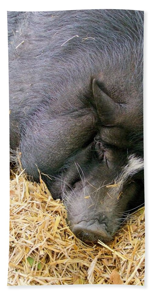 Pig Bath Sheet featuring the photograph Sleeping Sow by Mary Deal