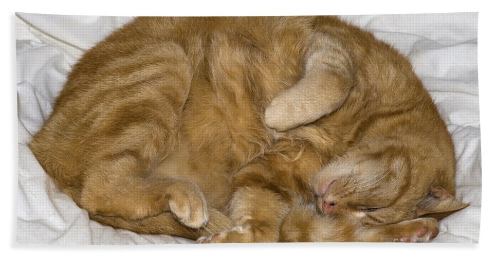 Cat Hand Towel featuring the photograph Sleepy Cat by Julie Woodhouse